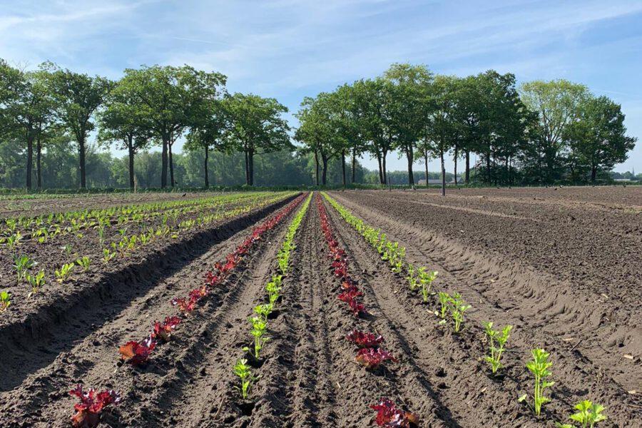 Herenboeren – Samen duurzaam voedsel verbouwen